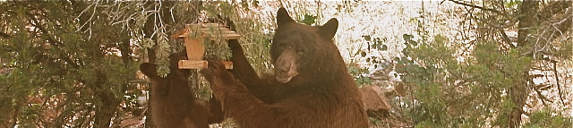 Report Bear Attractants