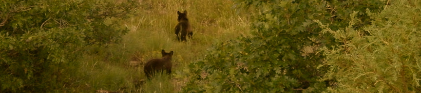 Other Organizations Addressing Human-Bear Conflict