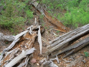 logs ripped up for insects