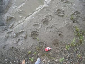 prints in mud