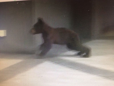 Resident in Estes Park, CO talks about a bear encounter in her home