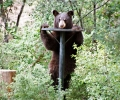 Make effort to coexist with bears