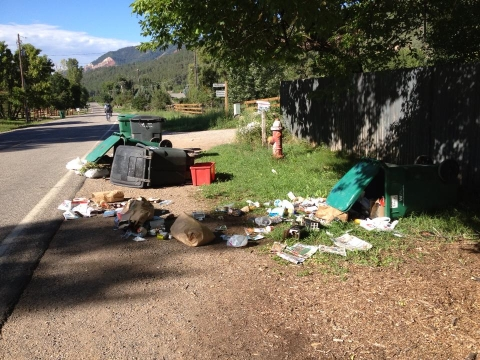 Please Report Bear and Trash Incidents