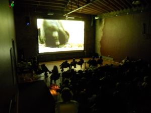Bear film at the Back Space Theater