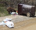 Be Bear Smart with trash and grease